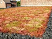 Systém pro zelené střechy Urbanscape od Knauf Insulation